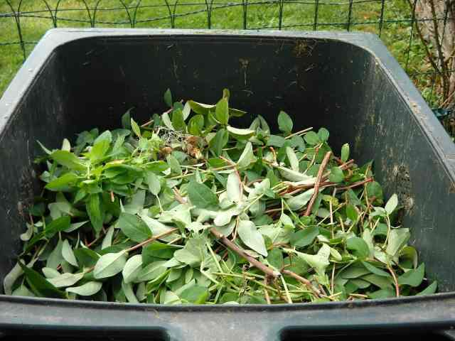 green waste in compost