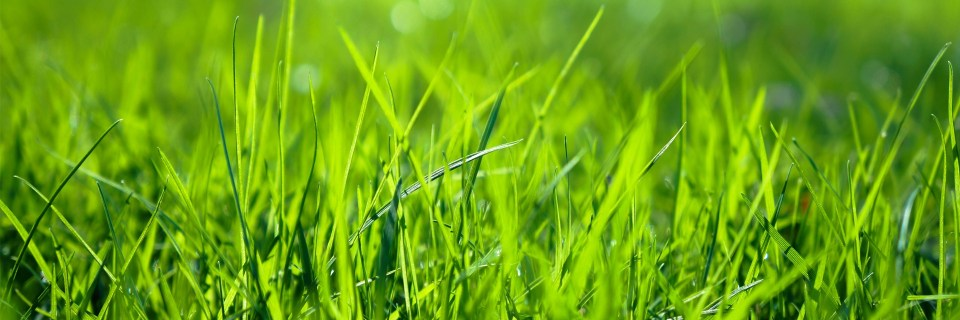Get The Best Lawn on the Block.