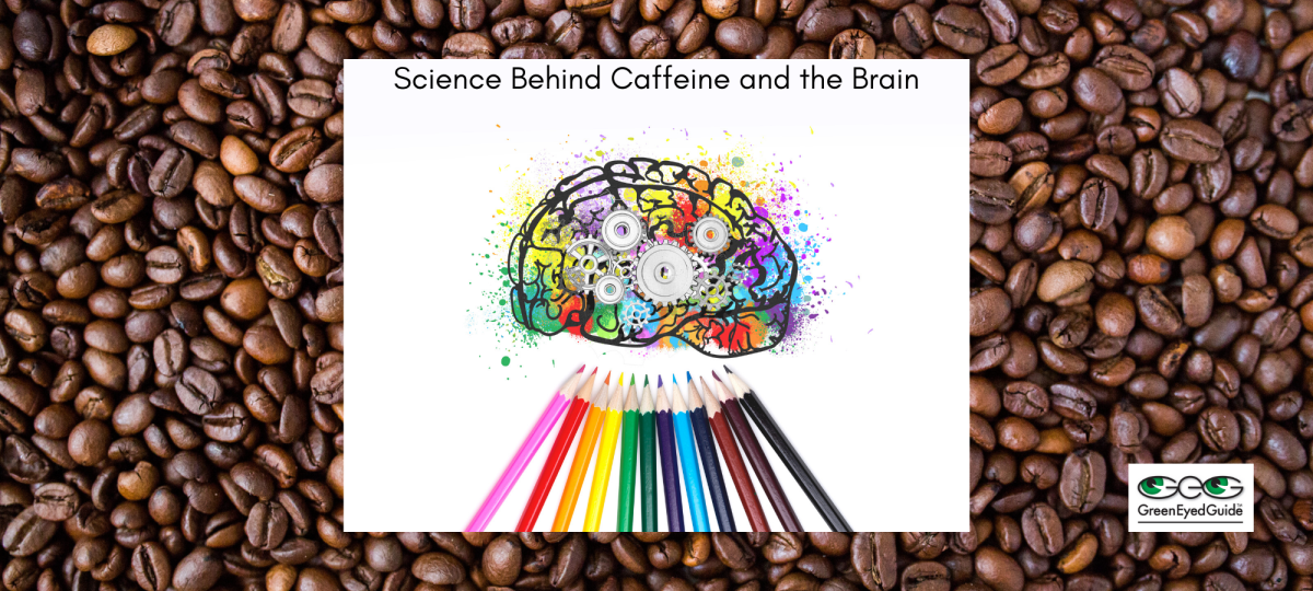 how caffeine affects the brain - GreenEyedGuide.com cover
