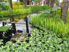Amazing water features
