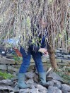 Lost my head in the willow tree