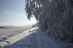 _zima 08