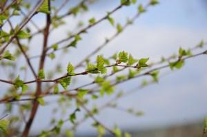 wiosna GG 10