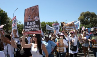Ban canned lion hunting March 2