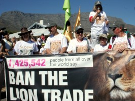 Ban canned lion hunting March 6