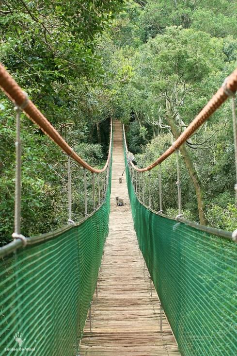 Suspension bridge at Monkeyland
