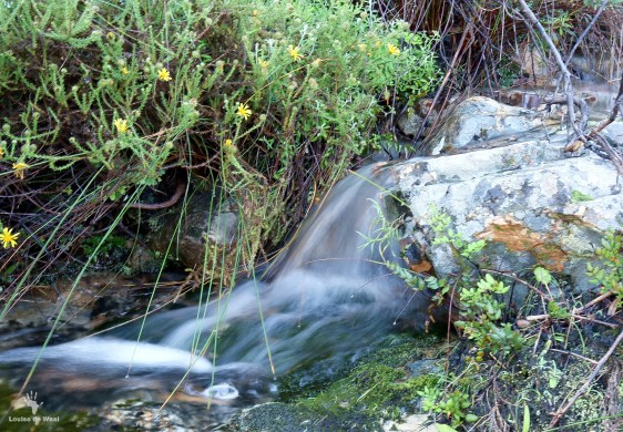 Bastiaanskloof streams in full flow after the rains.