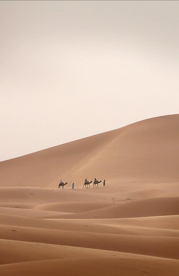 The world's 25 largest deserts, including Antarctica (#1), the Arctic (#2), the Sahara Desert (#3), Gobi Desert (#5), Kalahari Desert (#6), Patagonian Desert (#8), Chihuahuan Desert (#11), Great Sandy Desert (#12), Colorado Plateau (#14), Atacama Desert (#23), Mojave Desert (#24), Namib Desert (#25), and more. via @greenglobaltrvl