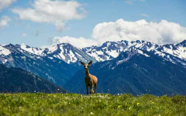 View of scenery and wildlife in Olympic National Park that led to it becoming one of the best UNESCO sites in the USA