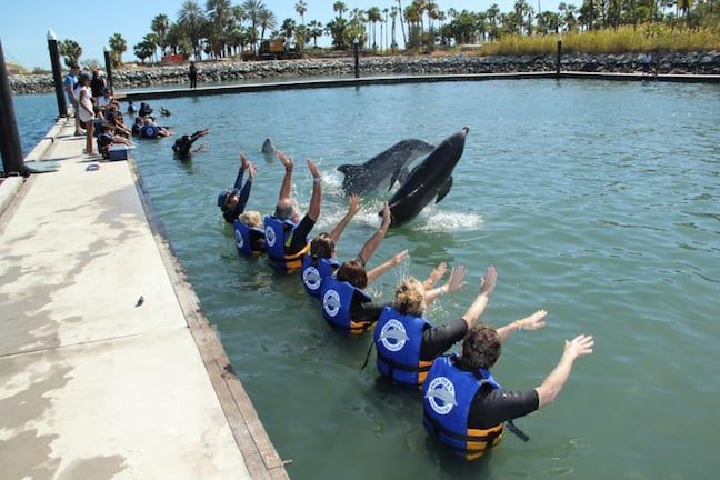 Dolphin Discovery Dolphinarium in Los Cabos
