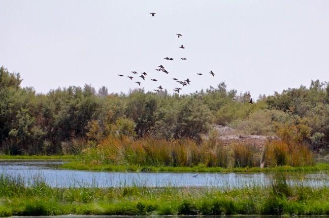 Birdwatching at Azraq Wetland Reserve, Jordan