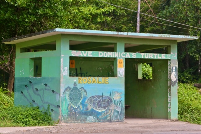 Sea Turtle Conservation, Rosalie Bay Resort, Dominica