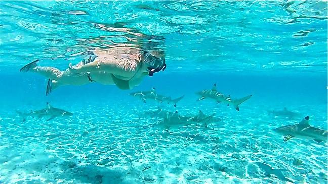Snorkeling with sharks in Bora Bora, Tahiti