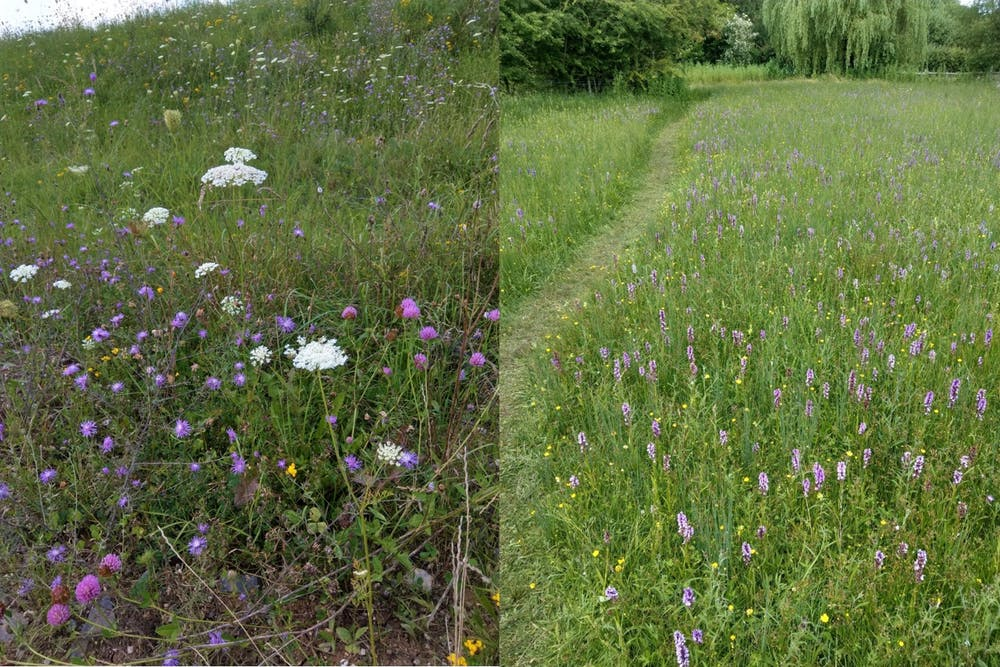 Left - Wild grassland in Transylvania. Right - Potwell Dykes, Nottinghamshire – how much of the UK's lost grassland would have once looked. Adam Bates