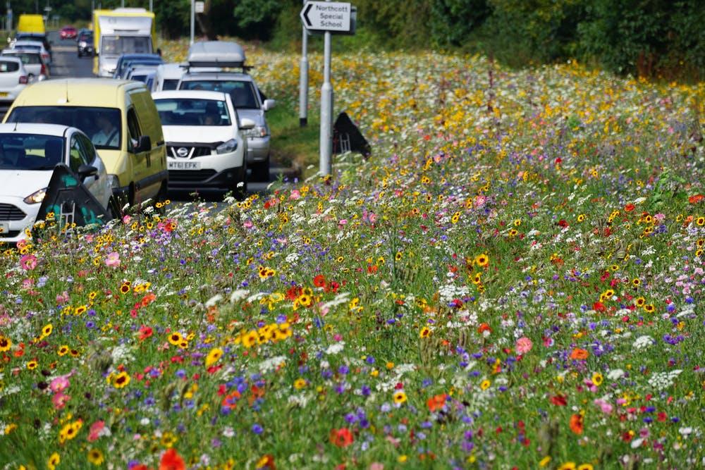 A roadside verge teeming with wildflowers in Rotherham, UK. Pictorial Meadows