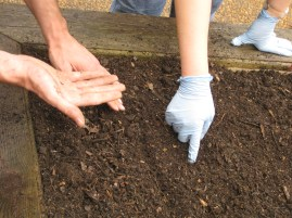 Therapeutic Gardening, Hands, Seeds and Soil