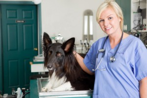 Pienso hipoalergénico perros