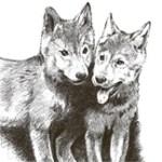Cachorros Perros
