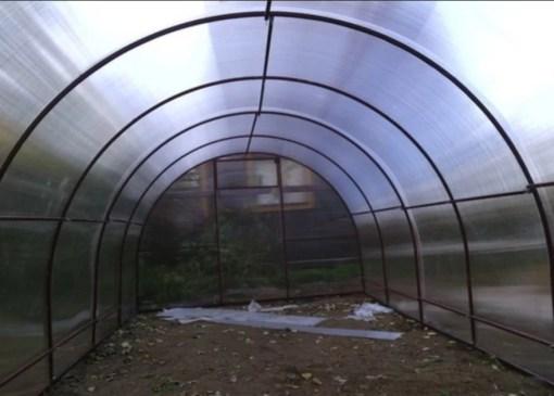 В теплице туннельного типа