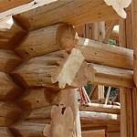 Почему дома из кедра и лиственницы элитные - сруб - GreenhouseBay.ru