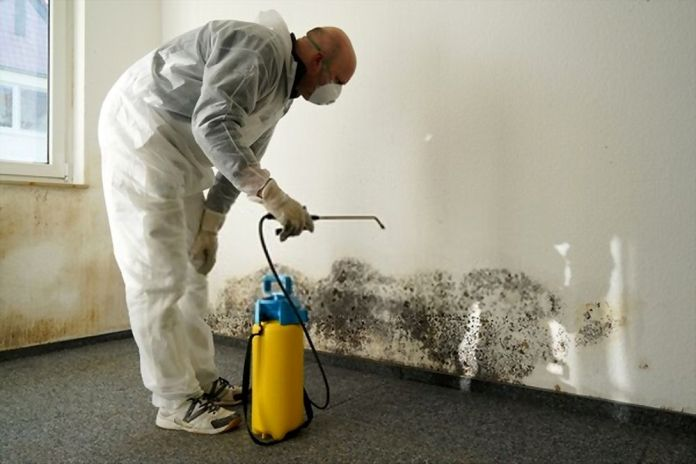 Some Tips on Mold Remediation