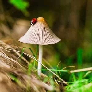 Is-it-safe-to-eat-wild-mushrooms-feature-image-300