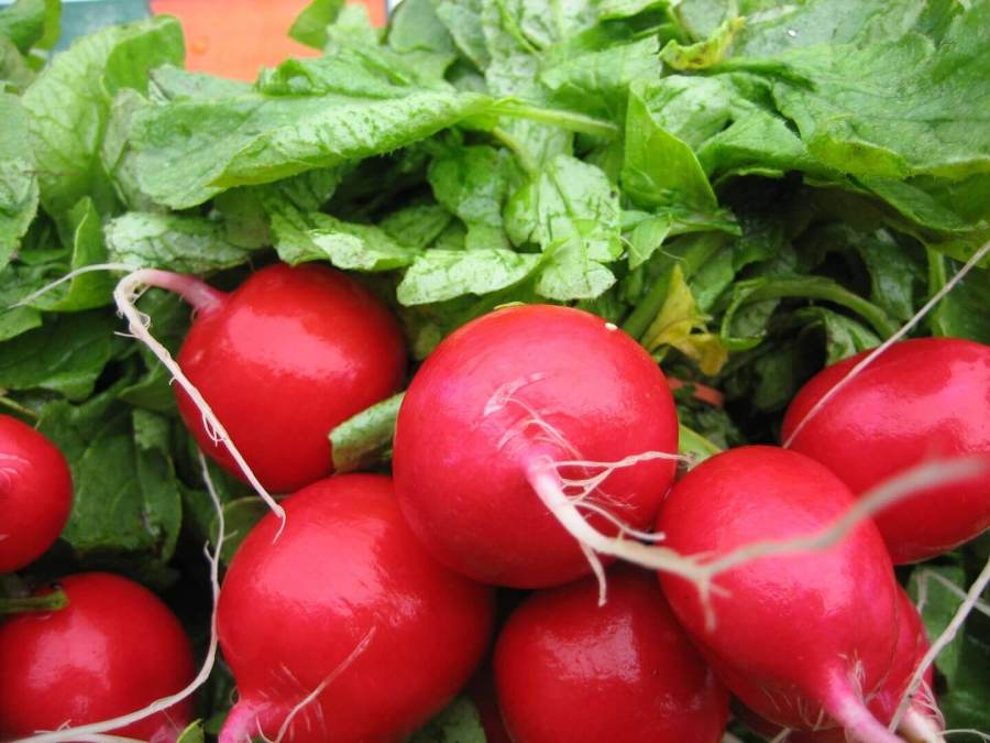 greenhouse radish 15 most profitable high tunnel winter crops