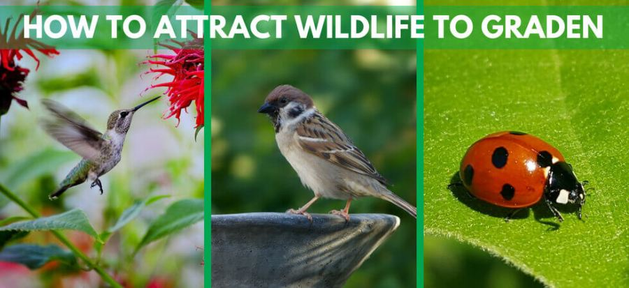Attracting wild life to your garden is very important and very benifical for your garden beauty and looks.