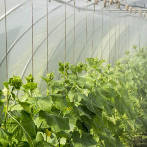 increasing the humidity of the greenhouse featured image: You can easily increase the humidity of your greenhouse by adding humidifiers and increasing damping in your greenhouse which will increase the evaporation and eventually increase thhe
