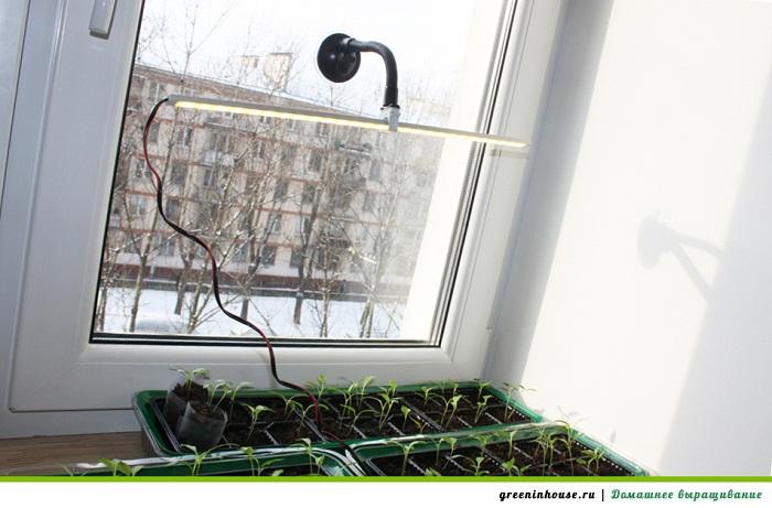 Комнатные помидоры выращивание зимой на окне