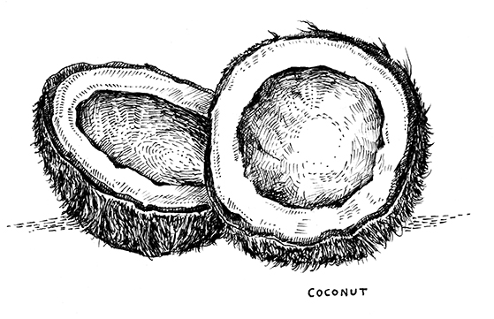 COCONUT_WEB