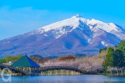 鶴の舞橋と桜