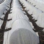 20FT-Long-Agfabric-Grow-TunnelMini-GreenhouseHoophouse-Tunnel-Kits-09oz-Row-Cover-and-Tunnel-Hoops-0-0