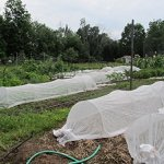 Agribon-AG-30-Floating-Row-Crop-Cover-Frost-Blanket-Garden-Fabric-Plant-Cover-Bonus-Ebook-Included-0-1