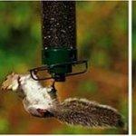 Droll-Yankees-YF-Flipper-4-Port-Hanging-Bird-Feeder-0-1