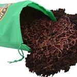 Uncle-Jims-Worm-Farm-5000-Count-Red-Wiggler-Composting-Worms-0-1