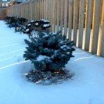 Winter-Shrub-Cover-0-1