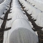 45FT-Long-Agfabric-Grow-TunnelMini-GreenhouseHoophouse-Tunnel-Kits-09oz-Row-Cover-and-Tunnel-HoopsPlant-Cover-Frost-Blanket-For-Season-Extension-and-Seed-Germination-0-1