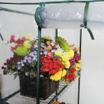 MyEasyShopping-Portable-Outdoor-4-Shelves-Greenhouse-Greenhouse-Plant-Shelves-3-Growing-Rack-Stand-Start-New-Adjustable-0