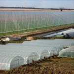 OriginA-Clear-Plastic-Film-Polyethylene-Covering-for-Greenhouse-and-Grow-Tunnel39mil12x25ft-0