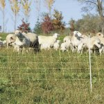 Premier-Enhanced-40-Electric-Sheep-Goat-Net-Fence-Yellow-9406EY-0-0