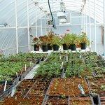 Solexx-Conservatory-Greenhouse-35MM-Deluxe-16x8x96-0-0