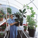 Solexx-Harvester-Greenhouse-35MM-Deluxe-8x8x8-0-0