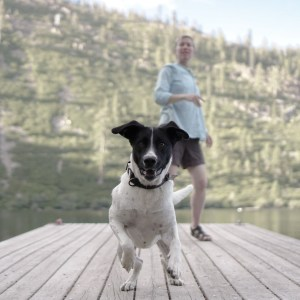 Salmon Lake California, Dog and owner mid action playing fetch on the lake is the best