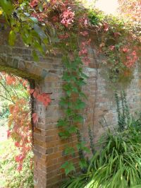 Archway draped in Virginia creeper