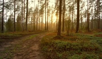 «Να ζούμε στο δάσος, αλλά να έχουμε και την ευθύνη του»