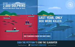 Source: TakePart.com infographic on the slaughter shown in the movie The Cove. With Rick O'Barry