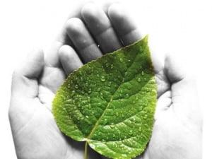 % Green Living Guru%Electric Care Expert
