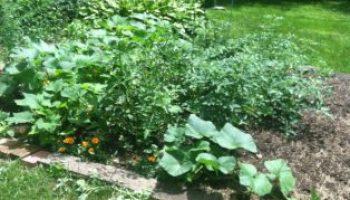 organic gardens, using eco friendly mulch, organic topsoil, organic seeds