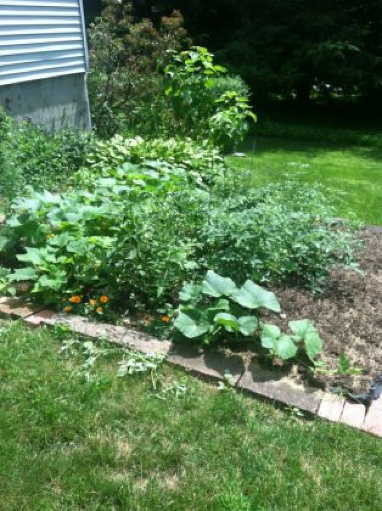 Organic garden sustainable and green